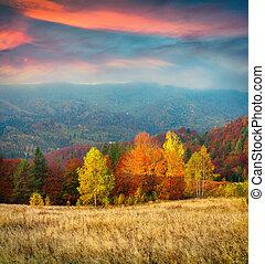 outono, montanhas, carpathian, coloridos, manhã