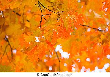 outono, muito, foco raso, folhas