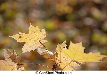 outono, muito, folhas, raso, foco.