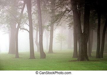 outono, névoa
