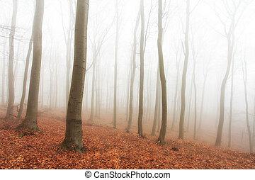 outono, névoa, floresta, árvores