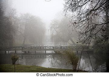 outono, névoa, sobre, a, lago, cheio, de, pássaros