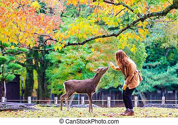 outono, nara, veado, japão
