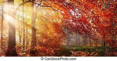 outono, nebuloso, árvore, vermelho, sunrays