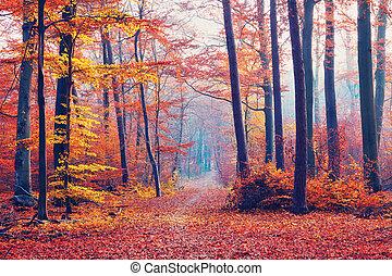 outono, nebuloso, floresta