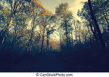 outono, noite, floresta