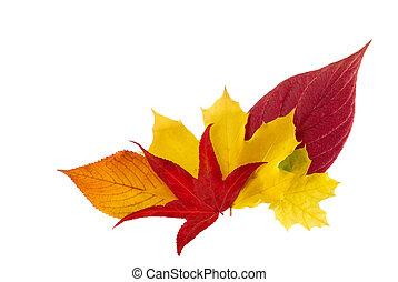 outono, ornamental, folhas, grupo