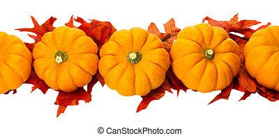 outono, ou, ação graças, ou, dia das bruxas, decoração, isolado, branco