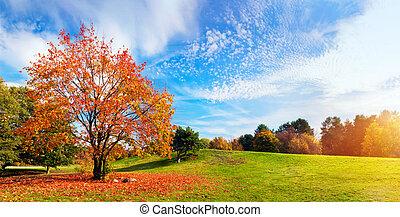 outono, outono, paisagem., árvore, com, coloridos, leaves.,...