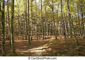 outono, outono, paisagem, -, árvores, em, floresta