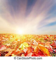 outono, outono, paisagem., coloridos, folhas, céu ocaso