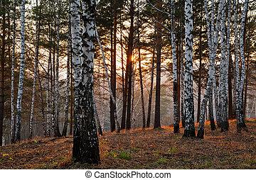outono, pôr do sol, floresta