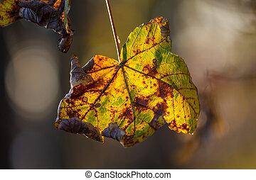 outono, pôr do sol, folhas, parque