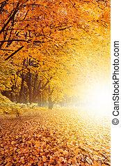 outono, pôr do sol, parque