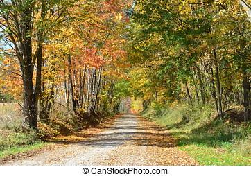 outono, país, dia, estrada
