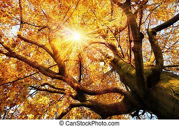 outono, paisagem, magnífico