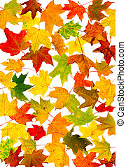 outono, papel parede