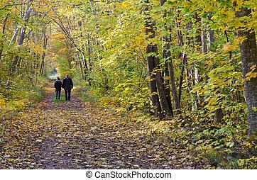 outono, par velho, passeio