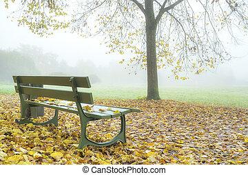 outono, park., nevoeiro