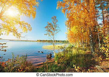 outono, park., outonal, árvores, lago