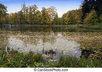 outono, parque, rio