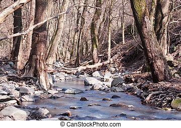 outono, pequeno, floresta, riacho
