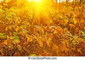 outono, plantas, ligado, amanhecer, instagram, stile