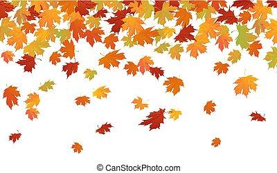 outono, queda sai, carvalho, baixo, maple
