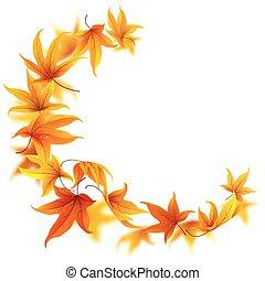 outono, queda sai, maple