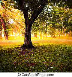 outono, raios sol, forest.