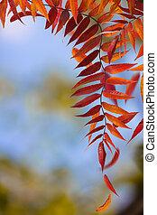 outono, ramos