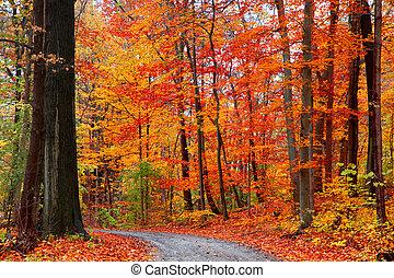 outono, rastro