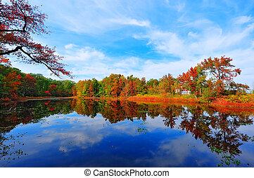 outono, reflexões, em, um, lagoa, perto, a, baía chesapeake, maryland