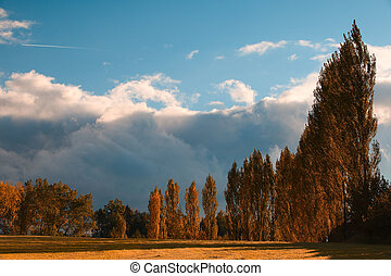 outono, ruela, de, a, árvores