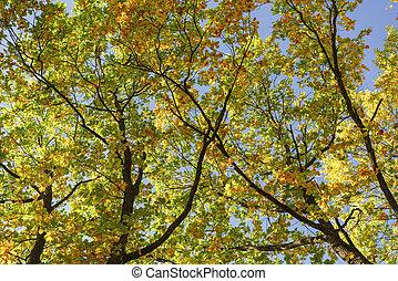 Outono, ruela, topo, abaixo, árvores