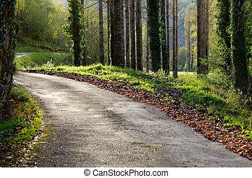 outono, rural, dia ensolarado, estrada