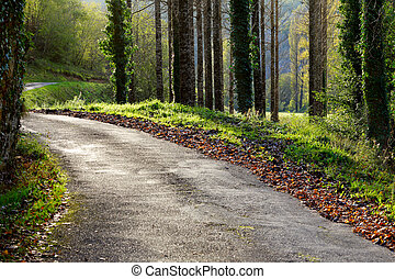 Outono,  rural, ensolarado, Dia, estrada