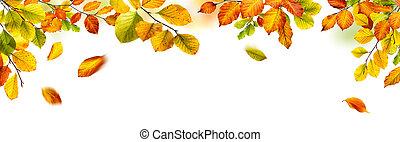 outono sai, borda, fundo branco