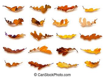 outono sai, cobrança