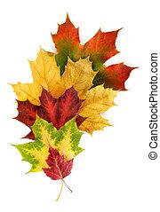 outono sai, colorido, arranjo