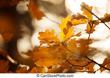 outono sai, coloridos