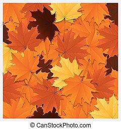 outono sai, coloridos, fundo