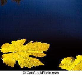 outono sai, e, água, abstratos, fundo