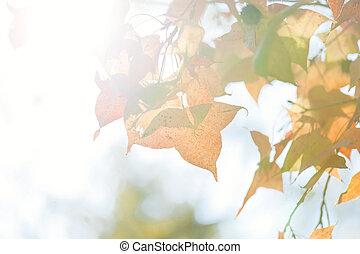 outono sai, em, sol
