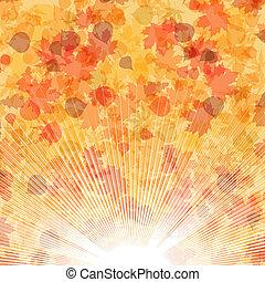 outono sai, experiência., eps, 8