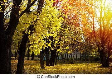 outono sai, fundo, amarela