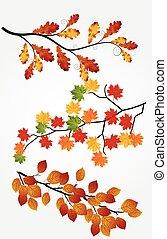 outono sai, fundo branco