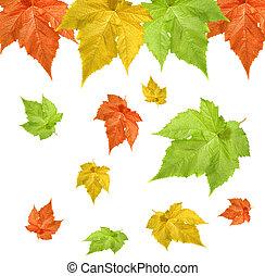 outono sai, fundo, isolado