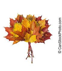 outono sai, grupo, coloridos