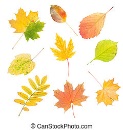 outono sai, isolado